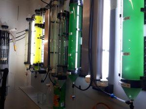 Phytoplanktonreaktoren im Klimahaus