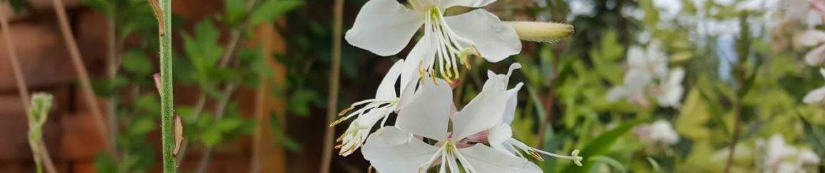 Blumenbeet im Kleingarten